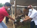 Kadis Perkebunan dan Peternakan Muaro Jambi, Zukarnaini memberi label terhadap hewan kurban.(Foto:Raden Hasan Efendi)