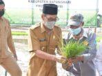 Wabup Bakhtiar praktekkan cara menanam padi.